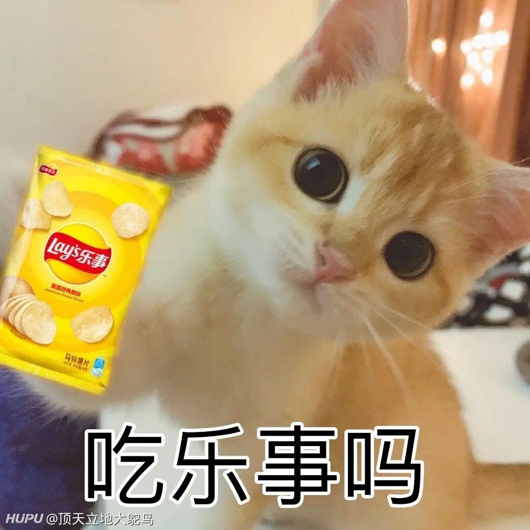 """为什么部分杨超越粉丝称呼杨超越养的猫""""小橘子""""为""""丑橘""""?插图2"""