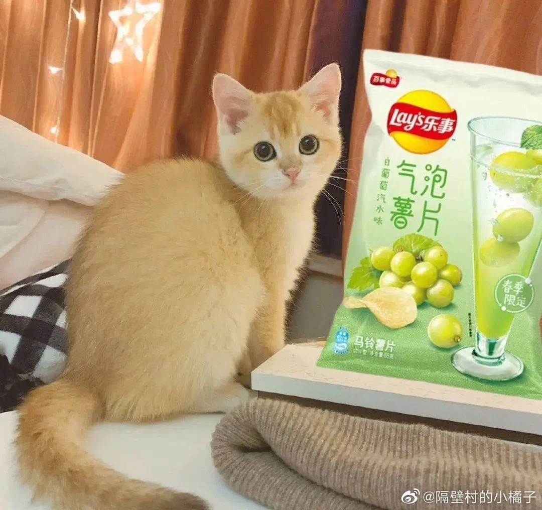 """为什么部分杨超越粉丝称呼杨超越养的猫""""小橘子""""为""""丑橘""""?插图"""